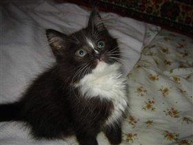 Алиса (фото 3)