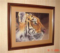 Тигр (оформленный)