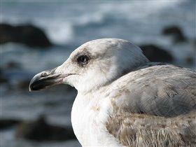 Океанская птица