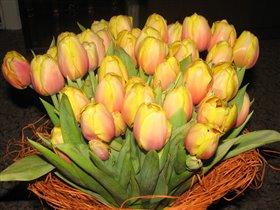 Мои деньрожденьевские тюльпаны
