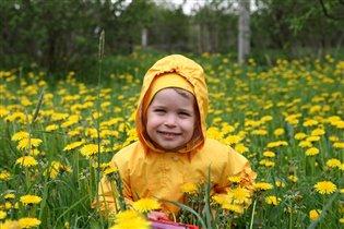 Весенний одуванчик