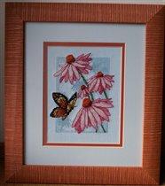 Dimensions Эхинацеи и бабочка