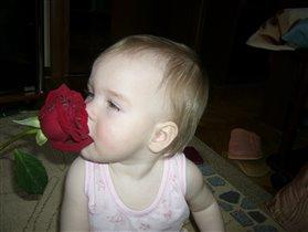 Первая роза для Алисы