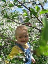 Наша пчелка Анюта в вишневом саду!!!!