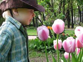 И у ковбоев сердце тает, когда тюльпаны расцветают...