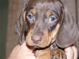 И еще раз новый собак :-)