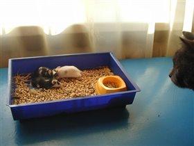Какие мыши .... и без охраны!
