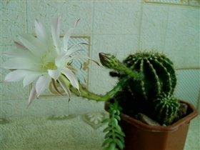 цветок №1