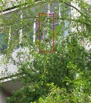 Вясна))) что только не распускается на деревьях