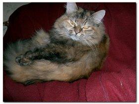 Сонькина родная сестра Дуська. Живет у моих родителей.