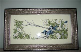 Птицы, 2007 год
