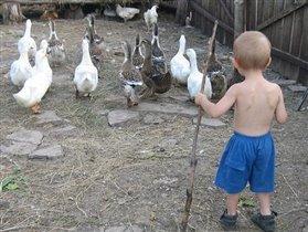 Маленький пастух :)