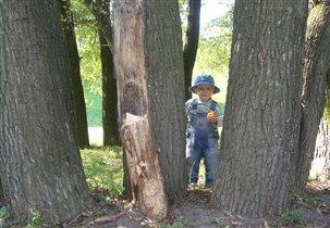 Когда деревья были большие...
