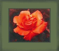 роза от ГК