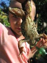 Моя ручная жаба