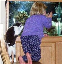 а где рыба-то?