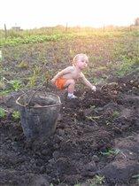 Натуралист – сельскохозяйственник!!!Так вот она какая, эта молодая картошка...