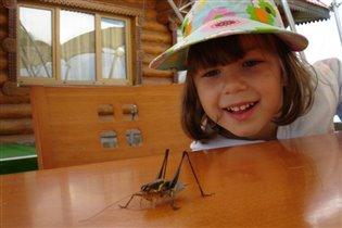 из жизни насекомых...