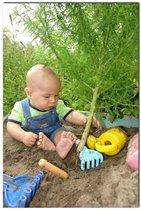 Скучно мне в песочнице играть,буду дерево в песочнице сажать....