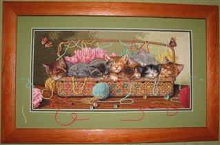 Коты Dimensions