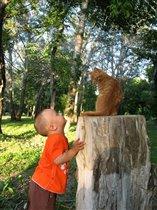 - Ну вот, опять этот несносный мальчишка зовет в кошки-мышки играть...