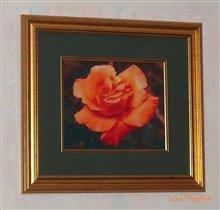 Оформленная роза