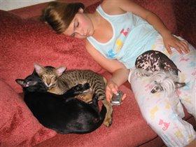 Хоть с котами мы друзья,но глава семейства -Я!!!)