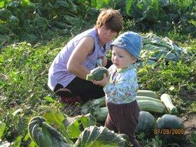 Помогаю бабуле собирать урожай!