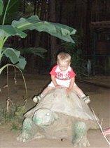 Покатай меня большая черепаха:)