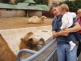 мы с верблюдом