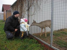 первая встреча с олененком