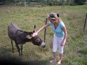 Хорватия, знакомство с местными осликами