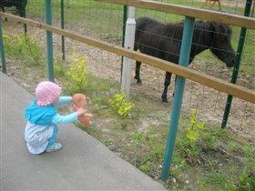 Катя, смотри, какая лошадка!
