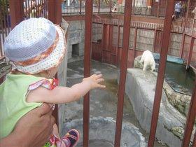 смотрим на белого медведя!