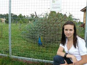 Чудо-птица павлин