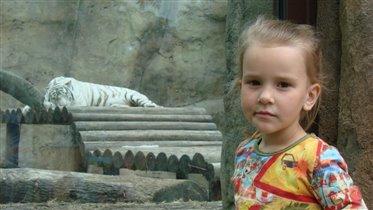Очень тигр понравился белый