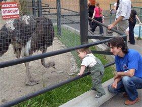 Жизнь в зоопарке.