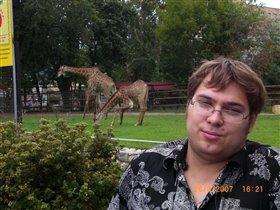 Жирафы впечатляяяяют!