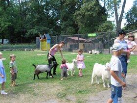 Детская контактная зона Калининградского зоопарка