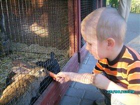 голодные зайчатки