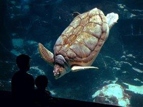 Ну, здравствуй, большааая черепаха!