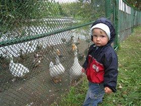 Жили в зоопарке два всёлых гуся...