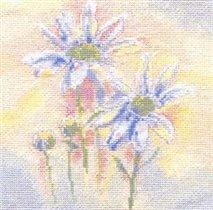 Shasta Daisies Watercolour (Derwentwater)