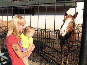 Аля впервые увидела лошадку
