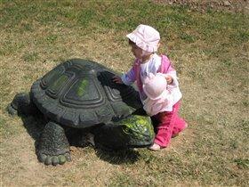 Вот такая черепаха живет в нашем городе!