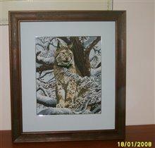 DMC_K5256_ Siberian Lynx