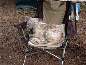 Патрик в любимом кресле