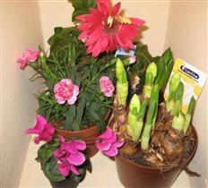 Цветы на 8 марта:)
