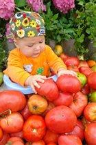 Люблю я помидорки их ем без остановки...