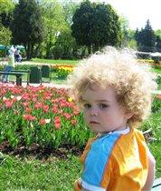 Одуванчик и тюльпаны